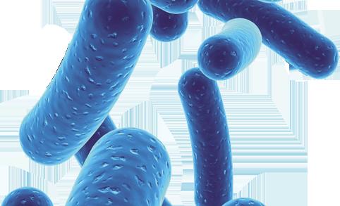 arthelio-Bifidobacterium-longum-bloquage
