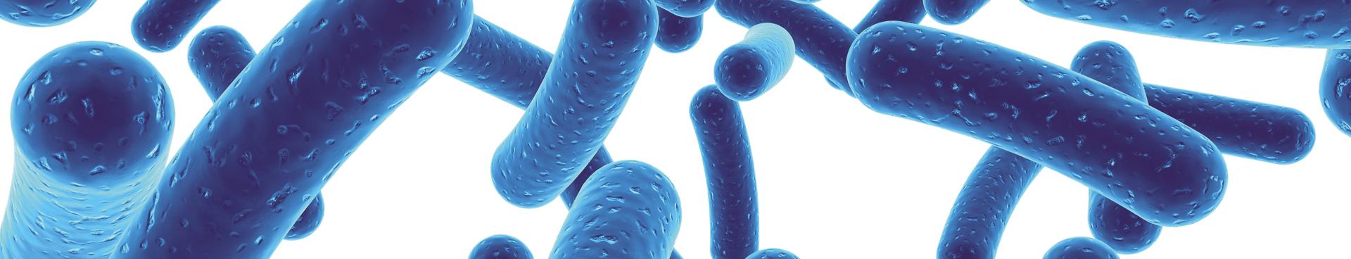arthelio-Bifidobacterium-longum